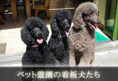 ペット霊園の看板犬たちイメージ