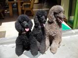 ペット霊園の看板犬たちが皆様をお待ちしております