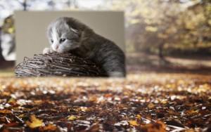 ペット葬儀の豆知識 イメージ