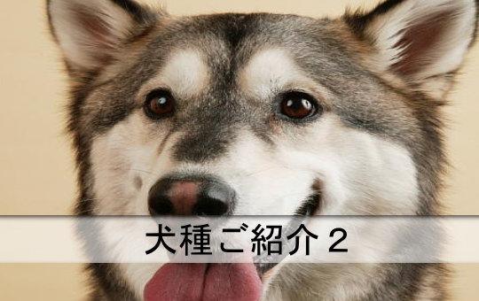 犬種ご紹介2