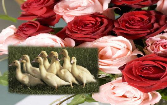 ペット葬儀の豆知識イメージ